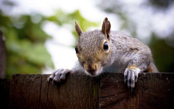 Бесплатные фото кролик,шерсть,мех,лапы,забор,зелень,животные