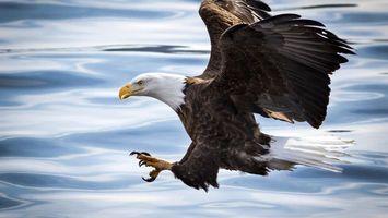 Бесплатные фото крылья,перья,темные,голова,белая,клюв,желтый