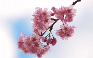 Фото бесплатно лепестки, дерево, ветка, весна, сирень, фон, цветы