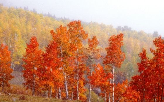 Photo free autumn, trees, birches