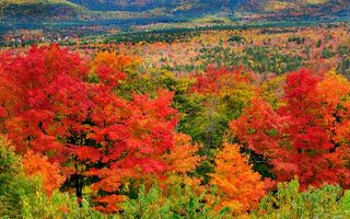 Фото бесплатно осенний день, деревья, лес