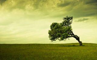 Бесплатные фото поле,трава,дерево,нагнутое,крона,небо,горизонт