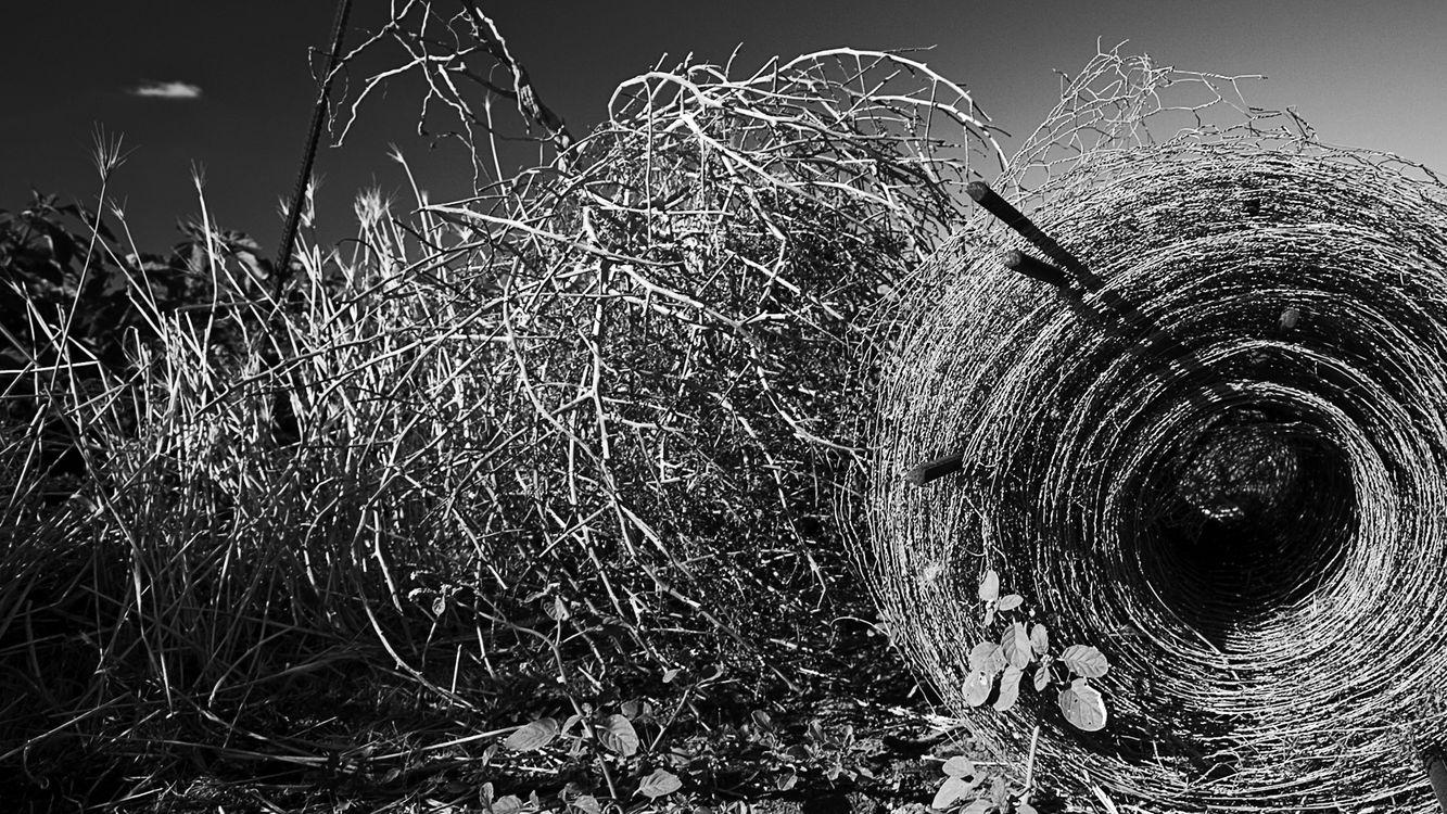 Фото бесплатно поле, трава, сухая - на рабочий стол