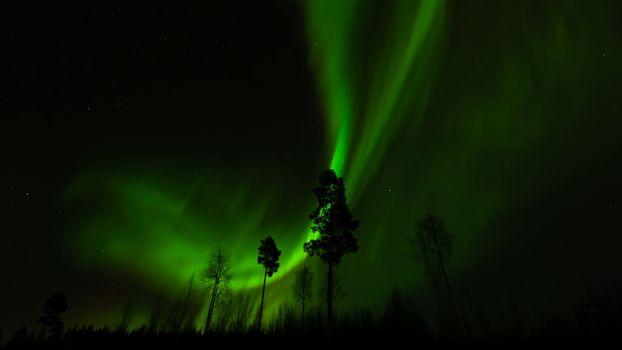 Бесплатные фото северное,сияние,атмосферное,явление,ночь,деревья,природа