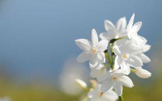 Бесплатные фото цветки,бутоны,лепестки,цветение,весна,лето,листья