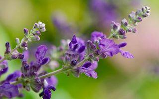 Фото бесплатно цветки, бутоны, листья