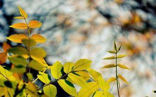 Фото бесплатно облачно, ветви, фон
