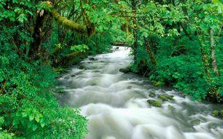 Бесплатные фото вода,река,деревья,лес,кусты,берег,камни