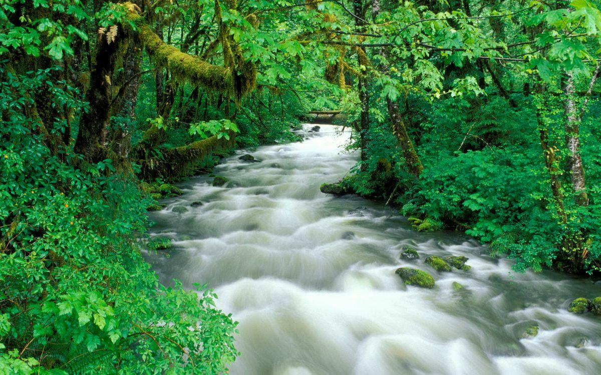 Фото бесплатно кусты, вода, деревья - на рабочий стол