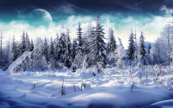 Фото бесплатно заснеженные ели, луна, снег