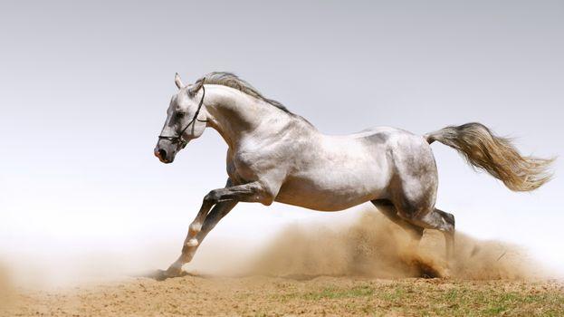 Фото бесплатно кінь, скачить, пісок, животные