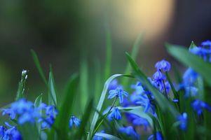 Фото бесплатно цветы, розмытость, синие