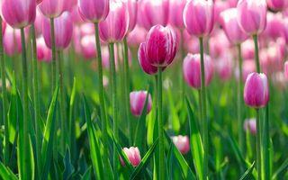 Фото бесплатно flowers hd, зелень, flowers bokeh