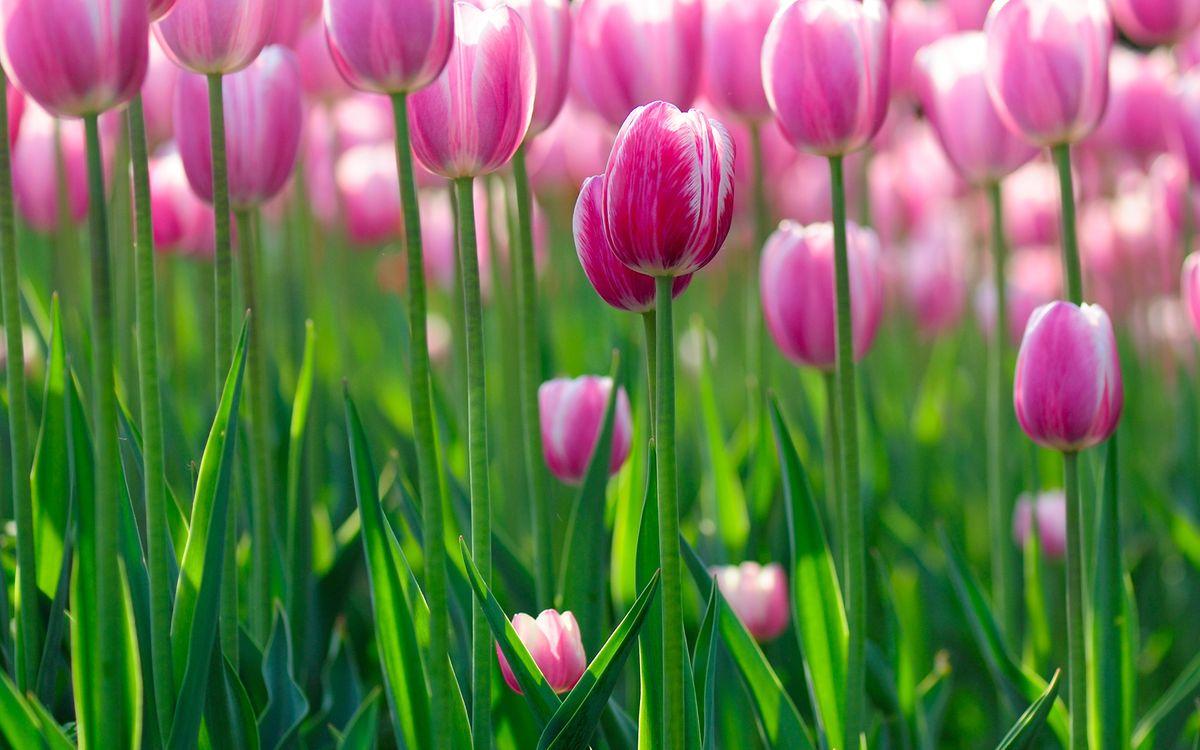 Free photo flowers hd, greens, flowers bokeh - to desktop