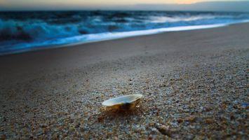Бесплатные фото ракушка, море, вода, песок, горизонт, небо, пейзажи