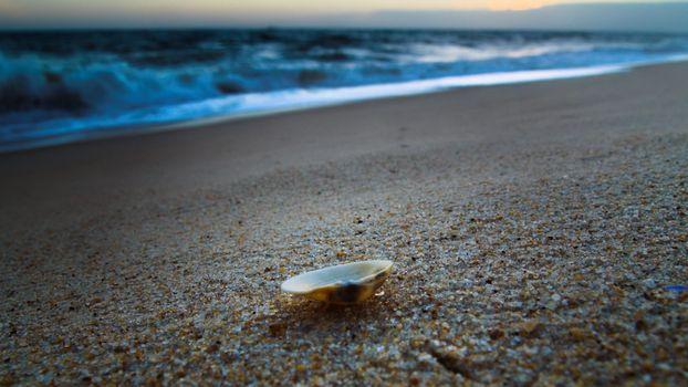 ракушка, море, вода, песок, горизонт
