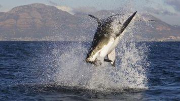 Фото бесплатно акула, прыжок, их воды