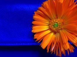 Бесплатные фото абстракция, цветной фон, разноцветный фон, текстура, art