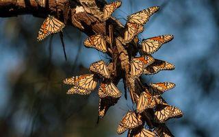 Бесплатные фото бабочки,крылья,узор,рисунок,дерево,ветка,семья