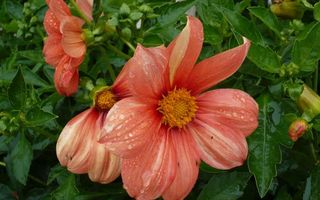 Photo free buds, petals, orange