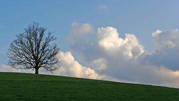 Фото бесплатно дерево, облака, трава