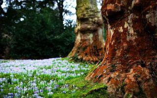 Фото бесплатно деревья, кора, цветы