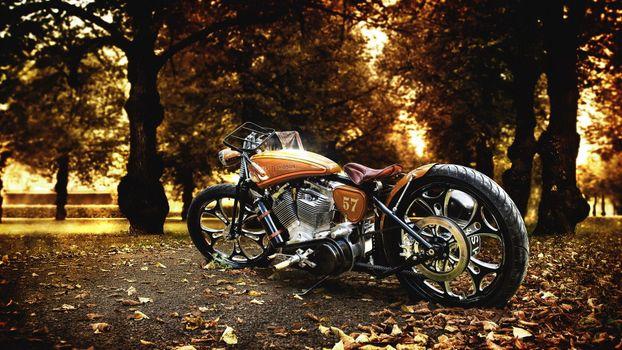 Фото бесплатно жёлто-коричневый harley-davidson, осенние листья, деревья