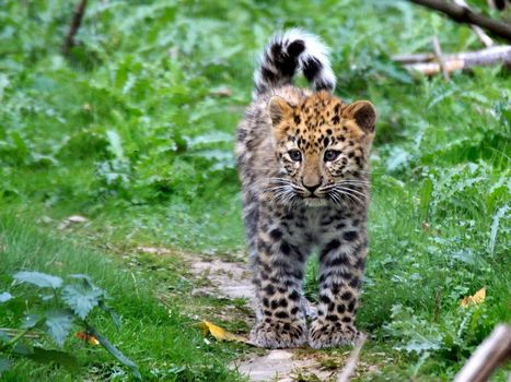 Photo free kitten, leopard, spots
