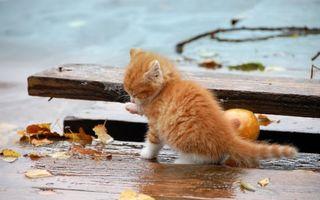 Фото бесплатно котенок, рыжий, маленький