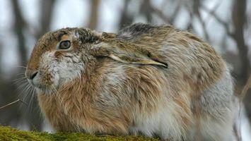 Бесплатные фото кролик,уши,глаза,трава,усы,деревья,животные