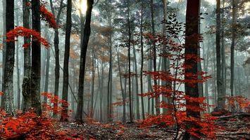 Фото бесплатно лес, деревья, кусты, трава, листья, красные, природа