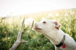 Фото бесплатно лето, собака, цветок