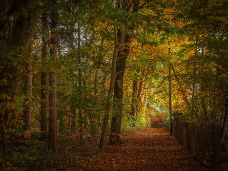 Photo free forest path, trees, forest