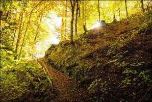 Бесплатные фото осень,лес,деревья,тропинка,перила,косогор,природа