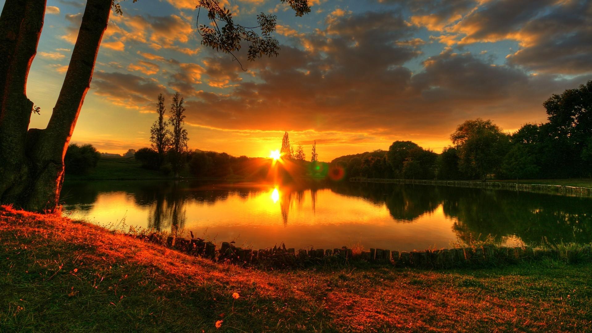 яркий закат над деревьями смотреть