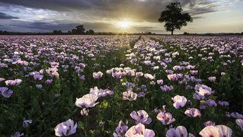 Обои поле, цветы, лепестки, листья, стебли, деревья, небо, солнце, облака