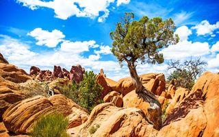 Заставки природа, дерево, камни