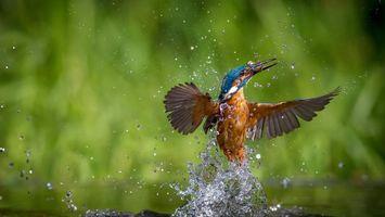 Фото бесплатно птица, вода, брызги