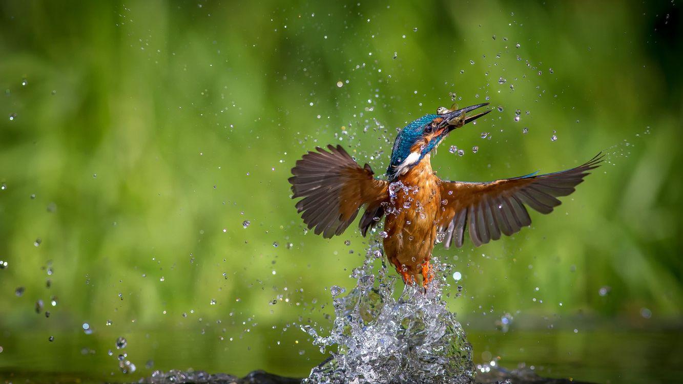 Фото бесплатно птица, вода, брызги - на рабочий стол