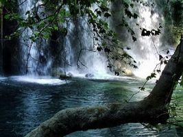 Фото бесплатно природа, дерево, река