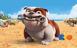Бесплатные фото рио,собака,персонаж,ключ,слюни,пляж,мультфильмы
