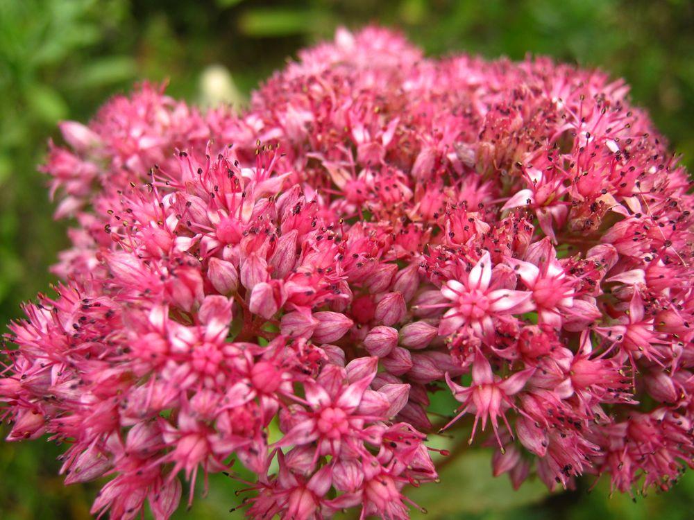 Фото бесплатно цветок, розовый, природа, разное, цветы, цветы