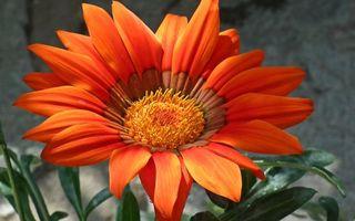 Бесплатные фото цветки,лепестки,листья,тычинка,серединка,стебель,весна
