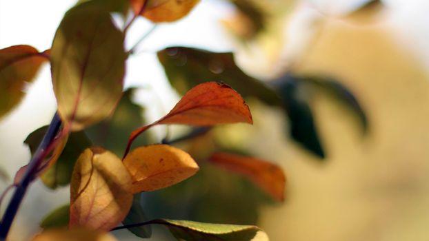 Фото бесплатно ветка, листья, зеленые