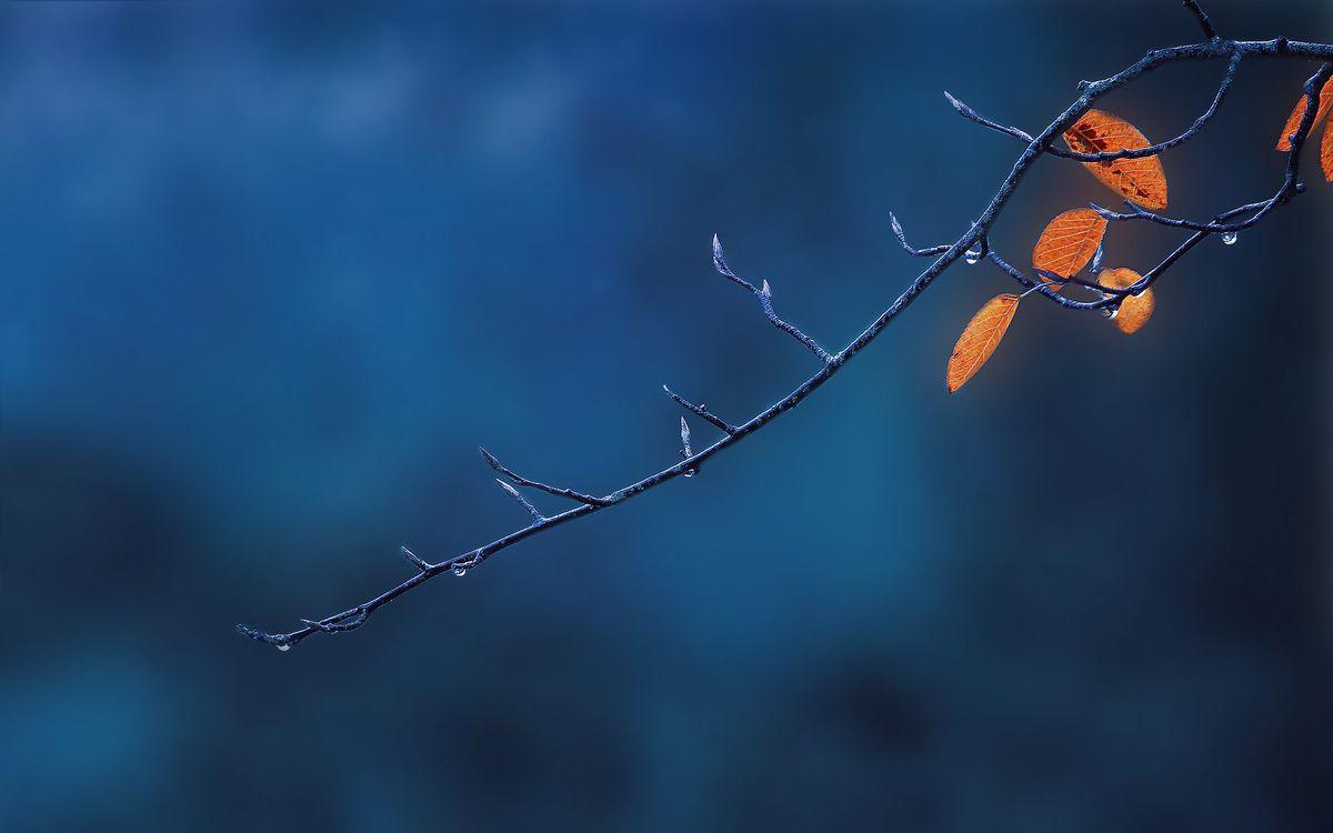 Фото бесплатно ветка, осень, листья, капли, дождя, природа, макро, макро