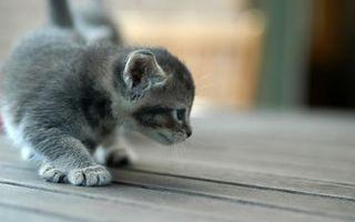 Бесплатные фото котенок,маленький,животные