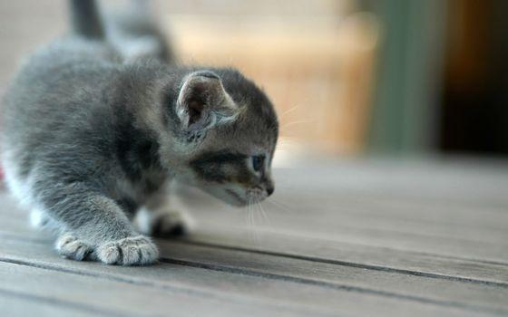 Заставки котенок, маленький, животные