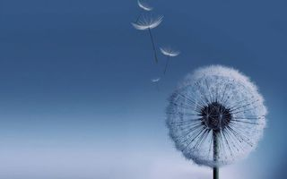 Фото бесплатно цветы, голубые, заставка