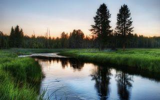 Бесплатные фото утро,природа,россия,деревья,речка,зелень