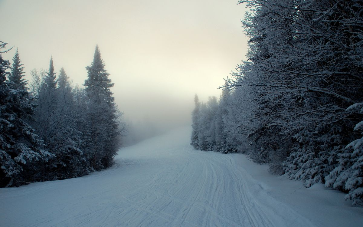 Фото бесплатно снег, зима, ели, туман, разное